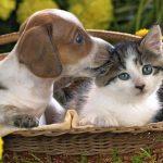 animals-puppies