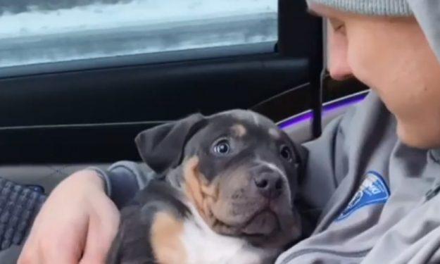 Timma_mamba_puppy